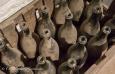 Vieilles bouteilles dans le musée Timmermans