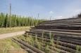 Des piquets de bois pour la houblonnière