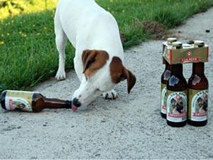 Kwispelbier, la bière pour chien