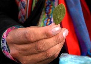 Feuille de coca en Bolivie (© Marcello Casal Jr./ABr)