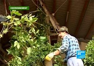 Le houblon allemand souffre du climat