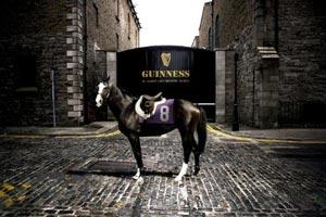 Un cheval de course invité chez Guinness