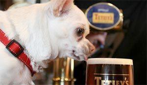 Bière pour chien dans un pub