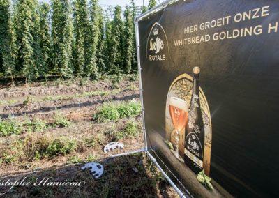 houblon-poperinge-40