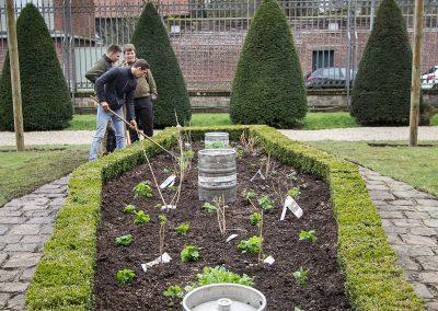Houblonnière en création dans les jardins